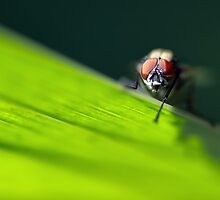 Ol' Red Eyes is Back by Neal Petts