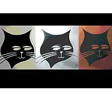 Three Sly Black Cats in Heat Photographic Print