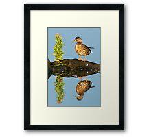 Mottled Duck Framed Print