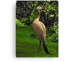 Stanley's Crane, Edinburgh Zoo Canvas Print