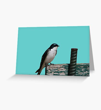 Tree Swallow Greeting Card