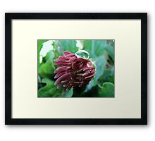 After The Morning Sprinklers Framed Print