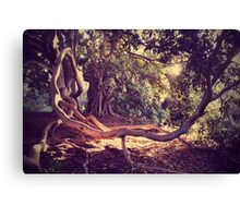 beautiful bower Canvas Print