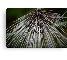 dried plant Canvas Print