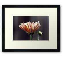 In your place of humility Framed Print