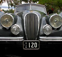 Jaguar XK 120, 1948 to 1954  by Carole-Anne