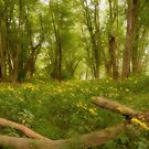 Woodland Meadow Dreams by jimHphoto