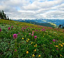 Olympic Mountains Wildflowers by Dan Mihai