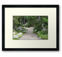 Trail Into The Wilderness Framed Print