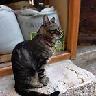 French cat ignores the paparazzi - St. Paul de Vence, France by tracyannjones