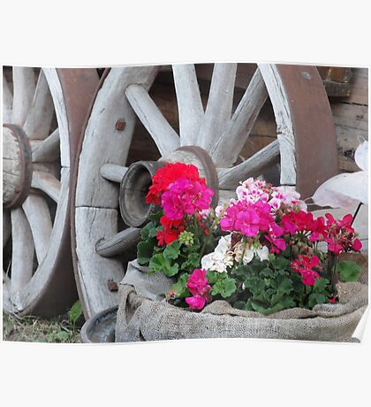 red and pink Geraniums with wagon wheels - Innsbruck, Austria Poster