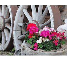 red and pink Geraniums with wagon wheels - Innsbruck, Austria Photographic Print
