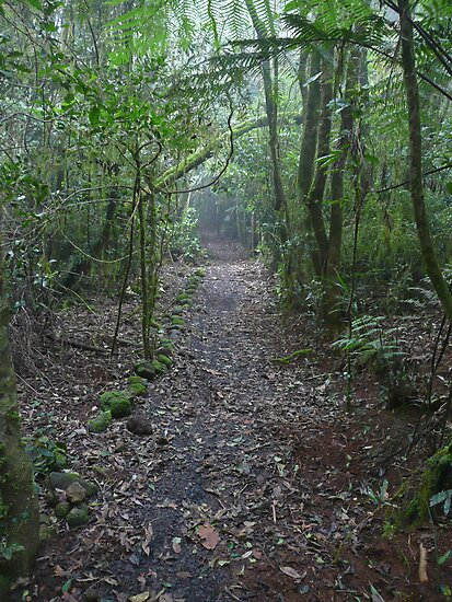 Falcorostrum Loop Walk, Border Ranges (2) by Margaret  Hyde