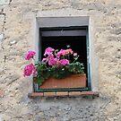 Geraniums on window sill - Vence, France by tracyannjones