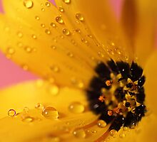 Reflections in Yellow  by Liane Pinel