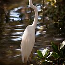 Great Egret, Ardea alba #1 by Odille Esmonde-Morgan