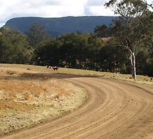 CONDAMINE RIVER ROAD by Colin Van Der Heide