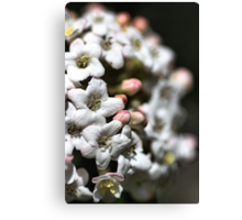 Natures Floral Ball Canvas Print