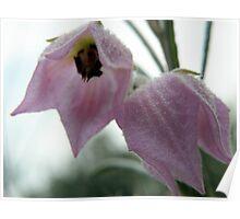 Lilac Bonnet Poster