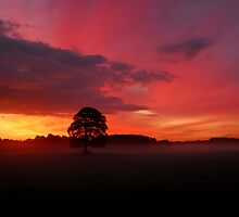 """""""OAKY AND THE DAWN SKIES"""" by snapitnc"""
