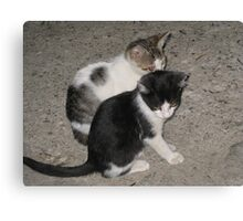 Kittens play Canvas Print