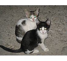 Kittens looking Photographic Print