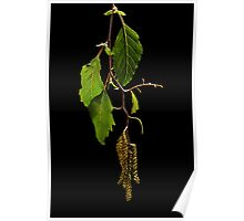 Spring Catkins Poster