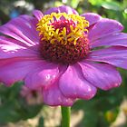 Glossy flower 1 by mdagis
