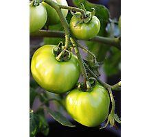 Green tomatos Photographic Print