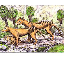Thylacine family Photographic Print