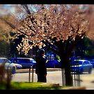 Spring Pear Blossoms by Rinaldo Di Battista