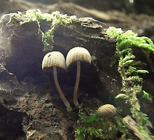 Tiny mushroom world. by Livvy Young