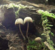 Tiny mushroom world. by Livvy Young