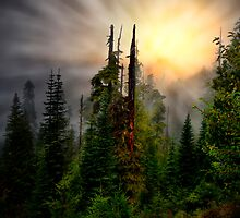 Light Me Up ~ Oregon High Cascades ~ by Charles & Patricia   Harkins ~ Picture Oregon