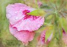 after the rain by Teresa Pople