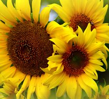 Happy Sunflowers by kkphoto1