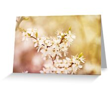 cherry tree young blossoms Greeting Card