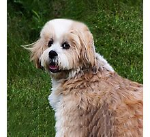 LHASA APSO-(I WISH I WAS A TEDDY BEAR)--PRECIOUS TEDDY BEAR CANINE APPAREL Photographic Print