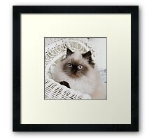 Kitten Portrait Framed Print