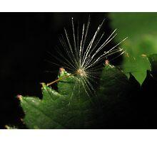 Lone Seed Photographic Print