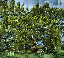 Oak with Gall, Argyll by cuilcreations