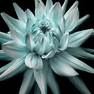 Blue Dahlia Corona by Rewards4life
