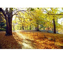 Morning Autumn Sun  Photographic Print