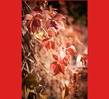 Parthenocissus quinquefolia vine red leaves  Womens Fitted T-Shirt