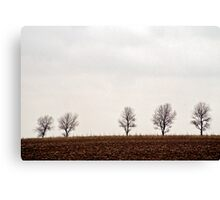 Five trees Canvas Print
