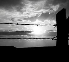 Barbed Wire by Roads Not Traveled by Ric J