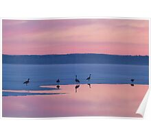 First Call in the Morning for Migrating Geese Poster