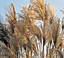 Ornamental grasses by Gary Rayner