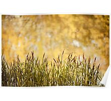 decorative reeds and yellow reflection  Poster