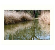 Reed bed reflection Art Print